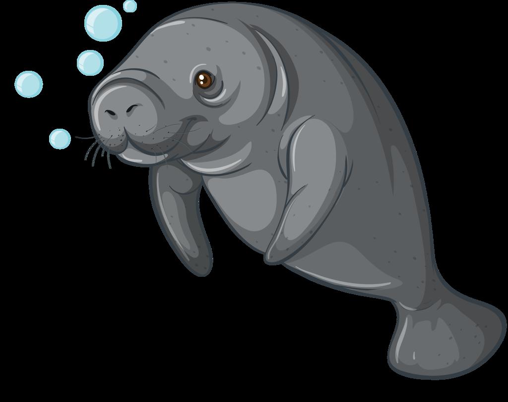 Rub Aquatiques 21 on Fish Clip Art With Transparent Background